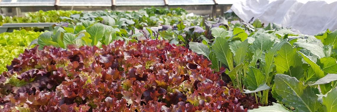 Gemüse und Salate